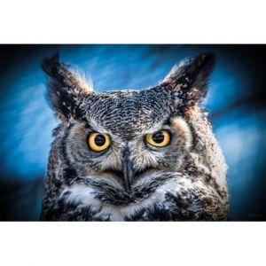 Mondiart Schilderij Owl Portrait