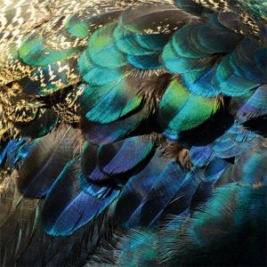 AluArt Colorful Peacock Feathers